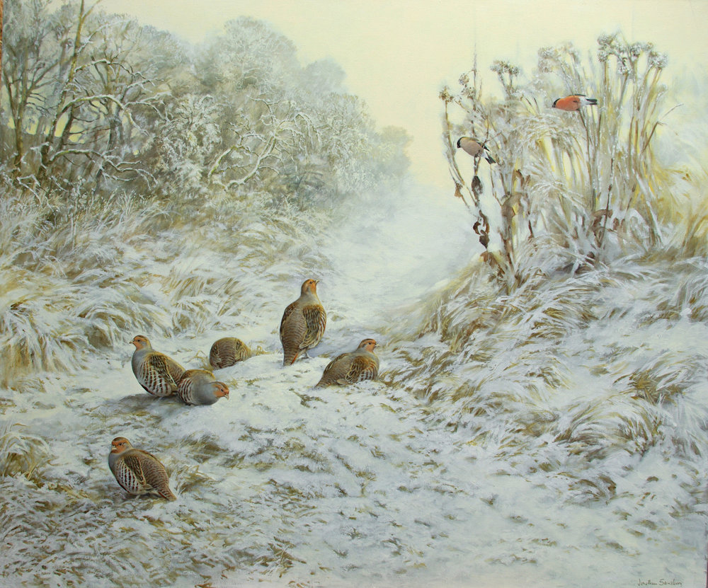 Partridges and bullfinches, Early-morning frost - oil - 40 x 48 inches by Jonathan Sainsbury