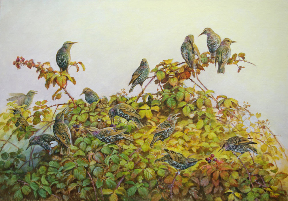 Chatter - starlings and brambles - oil - 25 X 36 ins - Jonathan Sainsbury
