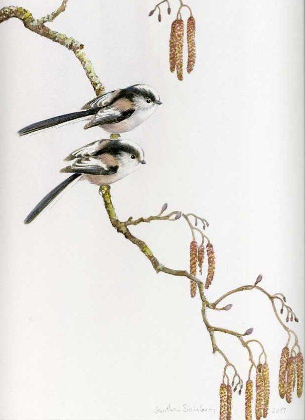 Long-tailed tits, alder catkins, watercolour, charcoal, Jonathan Sainsbury