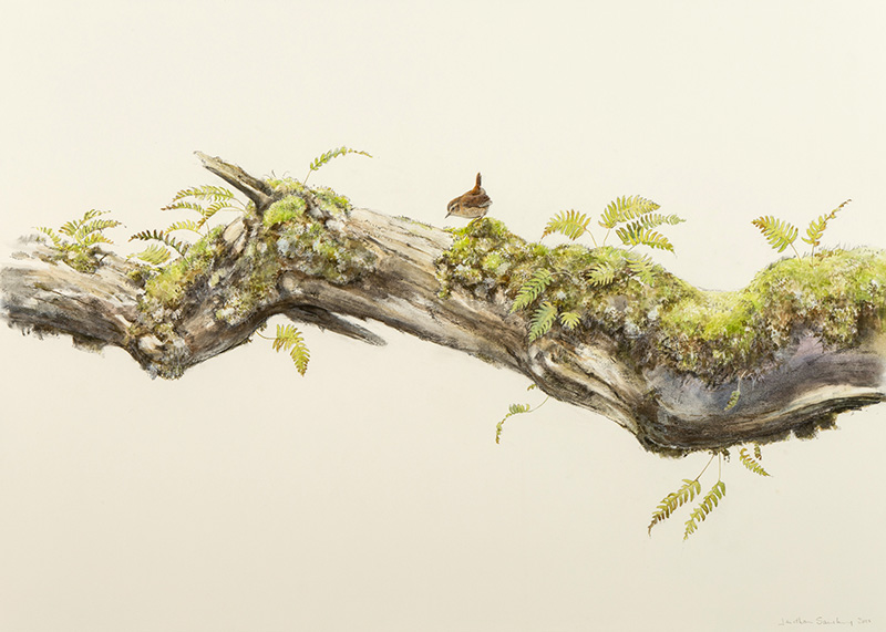 This is a painting of the Wren's world where the little bird searches for food and is part of a series of branch pictures