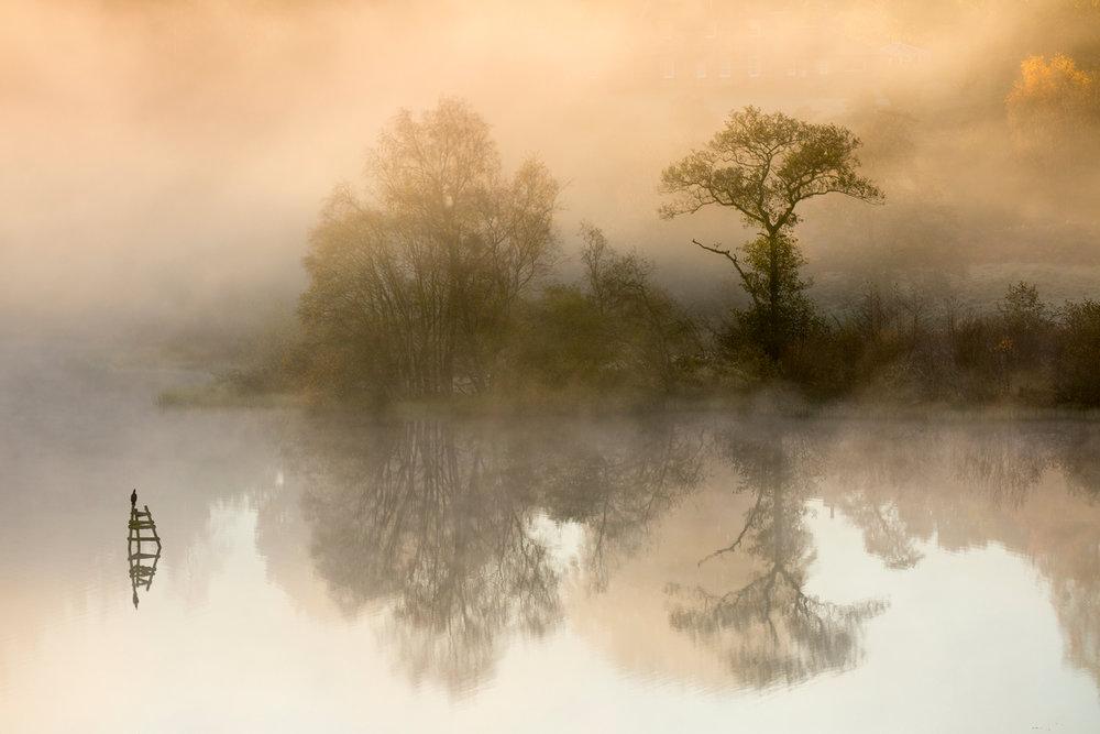 50 Cormorant on misty Carbeth Loch.jpg