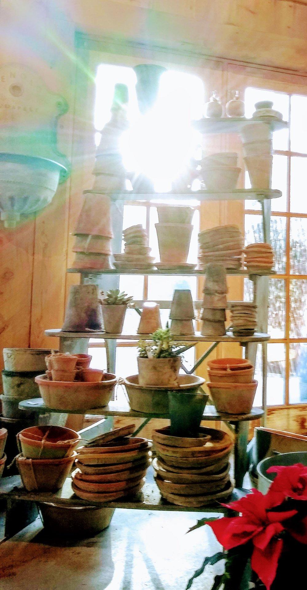 Herbary-Pots.jpg