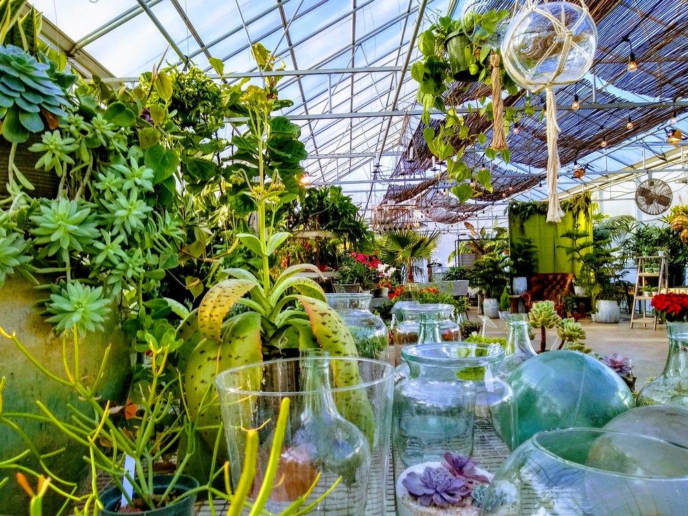 Herbary-Greenhouse-3-GlassnGreens.jpg