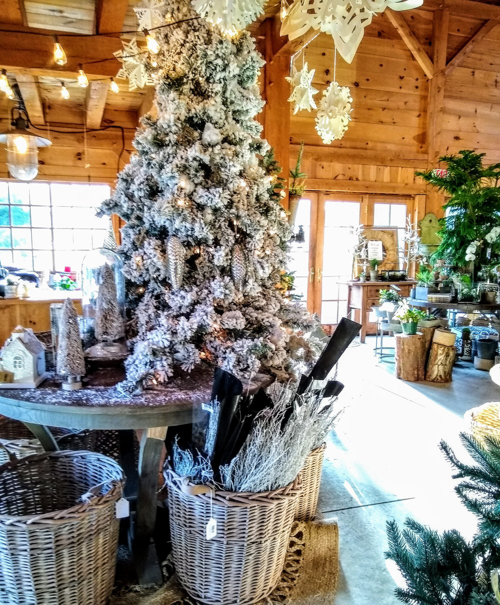 Herbary-ChristmasTrees.jpg