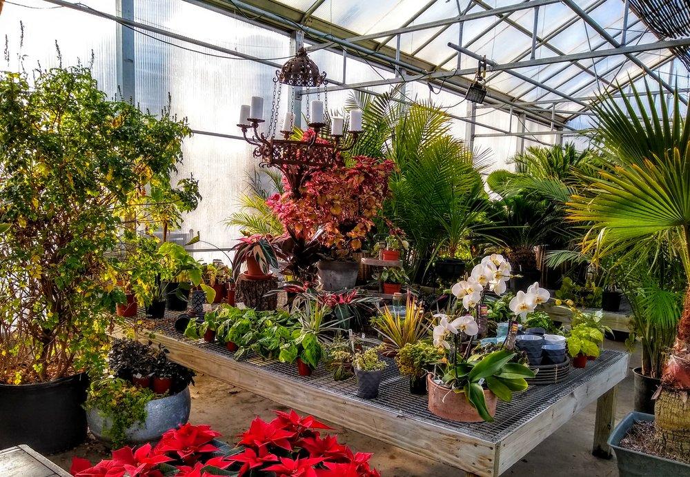 Herbary-Greenhouse-2.jpg