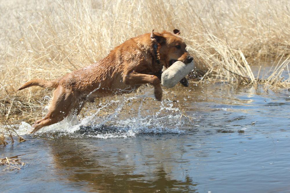 rob water retrieve