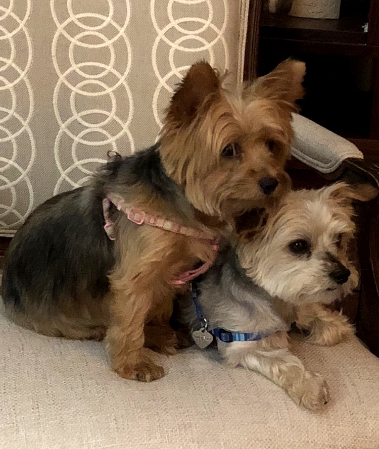 Mork & Mindy - These two rescued cuties are our Meet & Greet Committee!