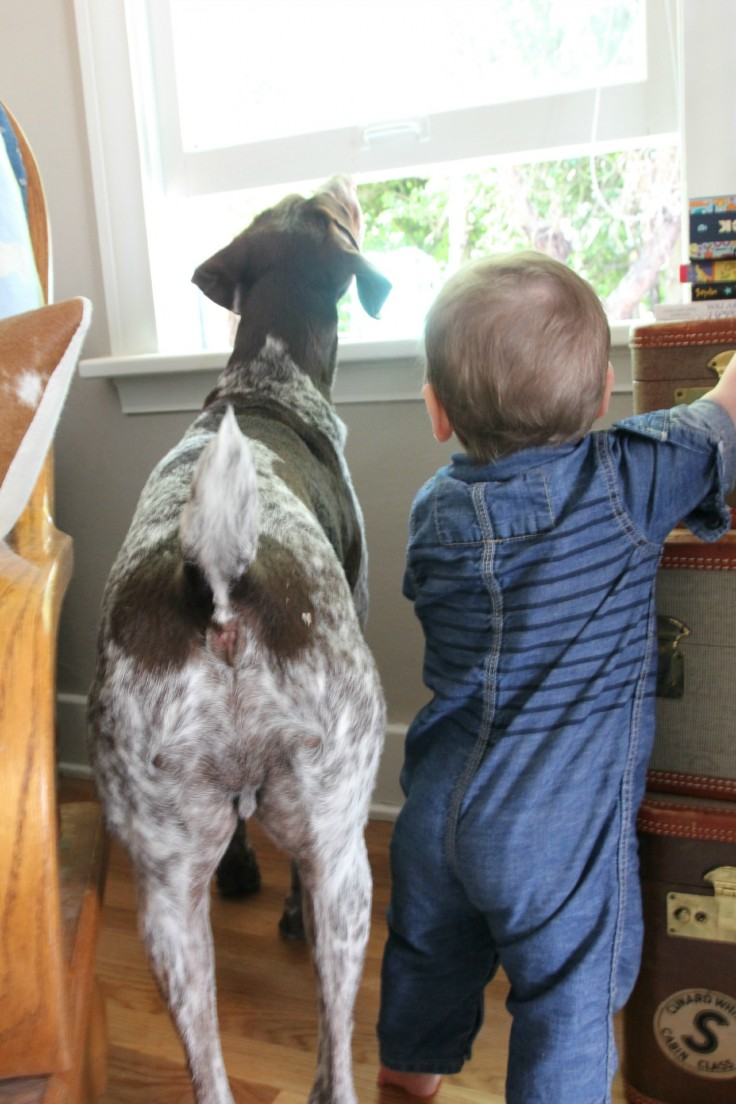 Wilder and Bubba at the Window
