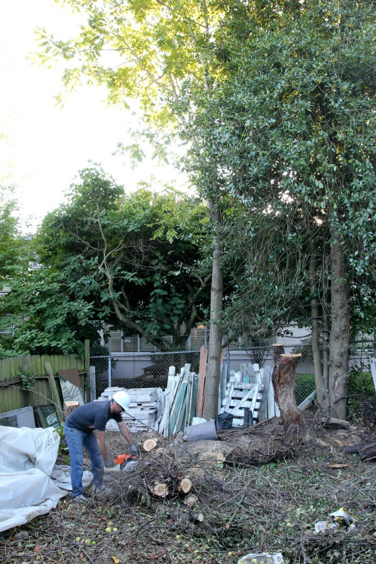 The Grit and Polish - Backyard Tree Removal 2