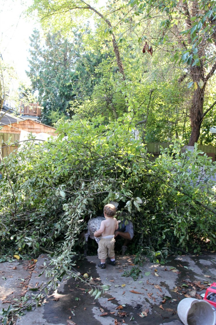 The Grit and Polish - Backyard pruning and fort-building