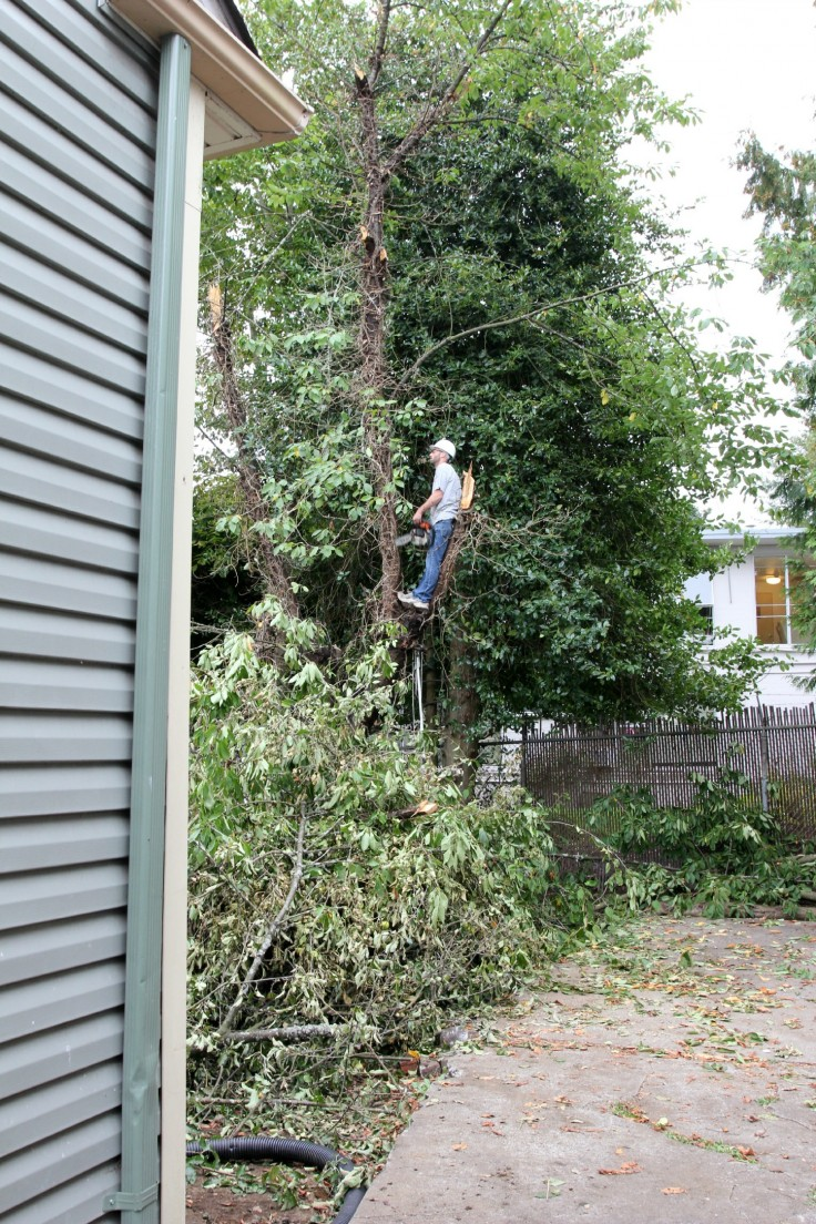 The-Grit-and-Polish-Backyard-tree-removal-e1410449723840.jpg