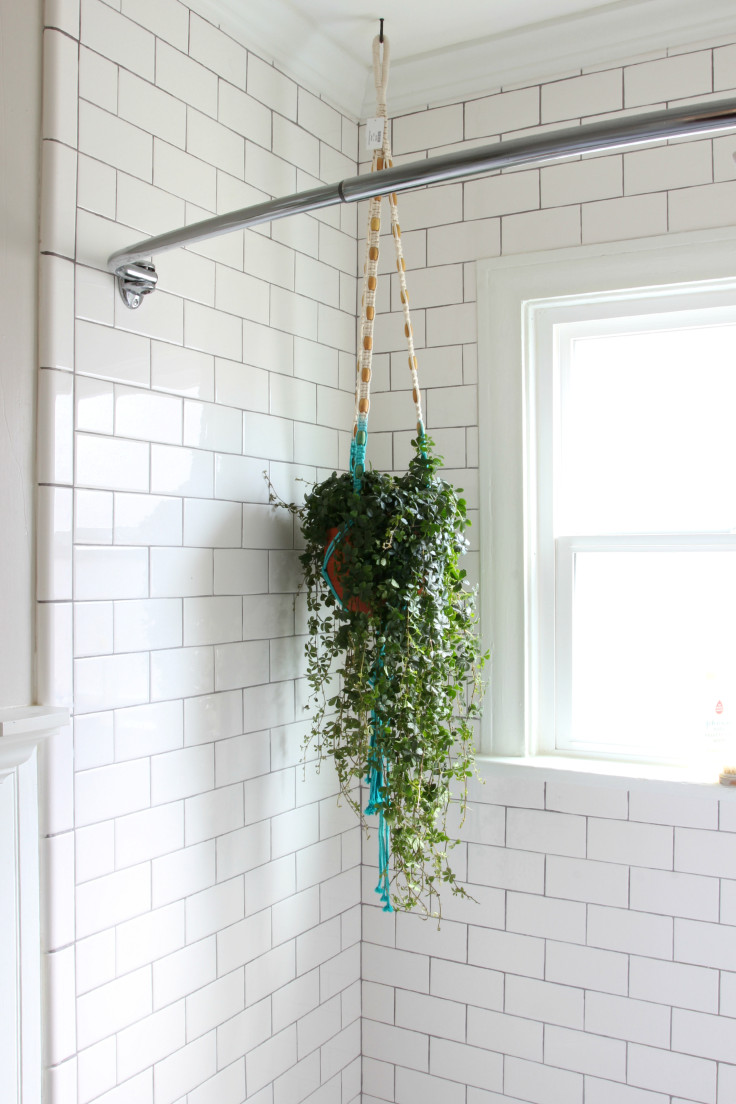 The Grit and Polish - Bathroom shower plant
