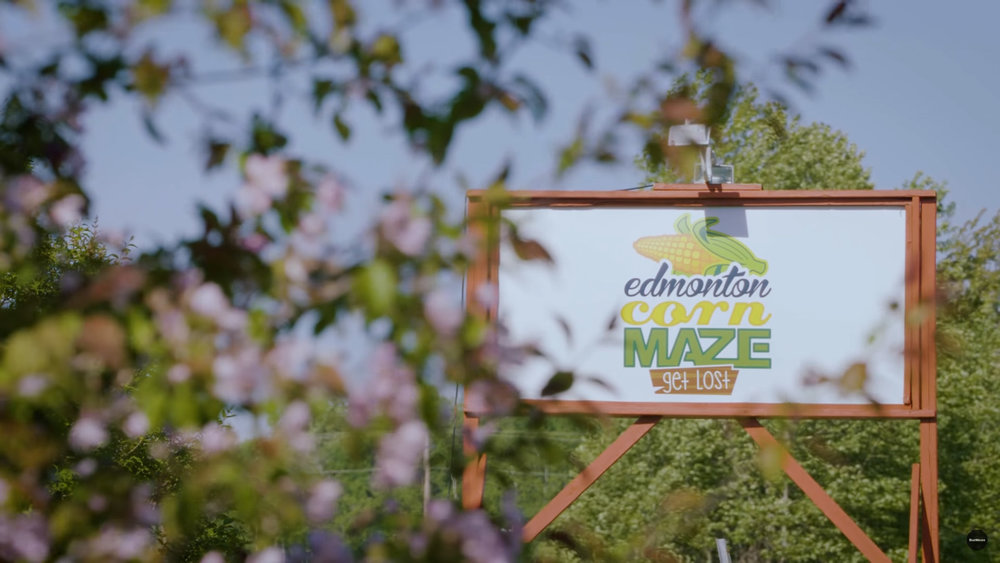 The corn maze is an Edmonton institution loved by local families.