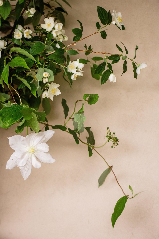 Tara Pollio Event Design - Flower Arrangement