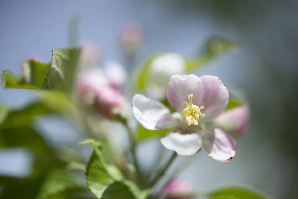 flower-small.jpg