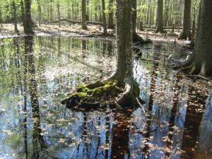 The low permeability of the rocky Sourland terrain creates perched wetlands and vernal ponds.