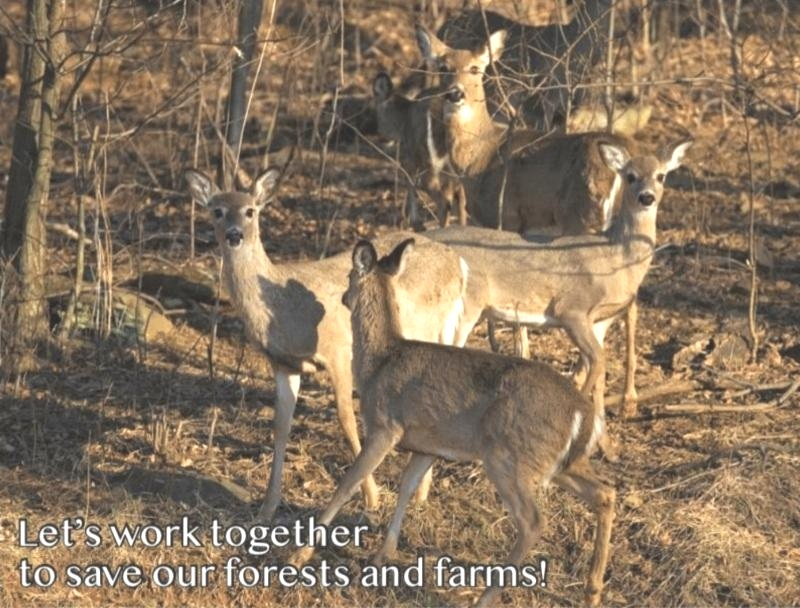 Deer328040643652_151150271492259840_n.jpg