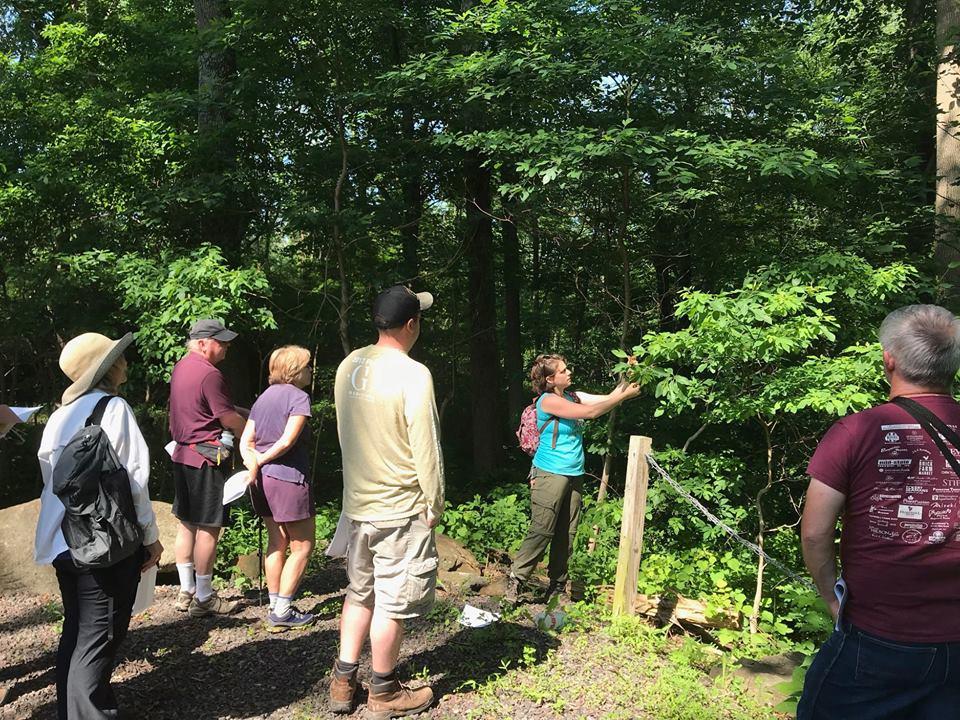 Carolyn Klaube leading a tree identification hike.