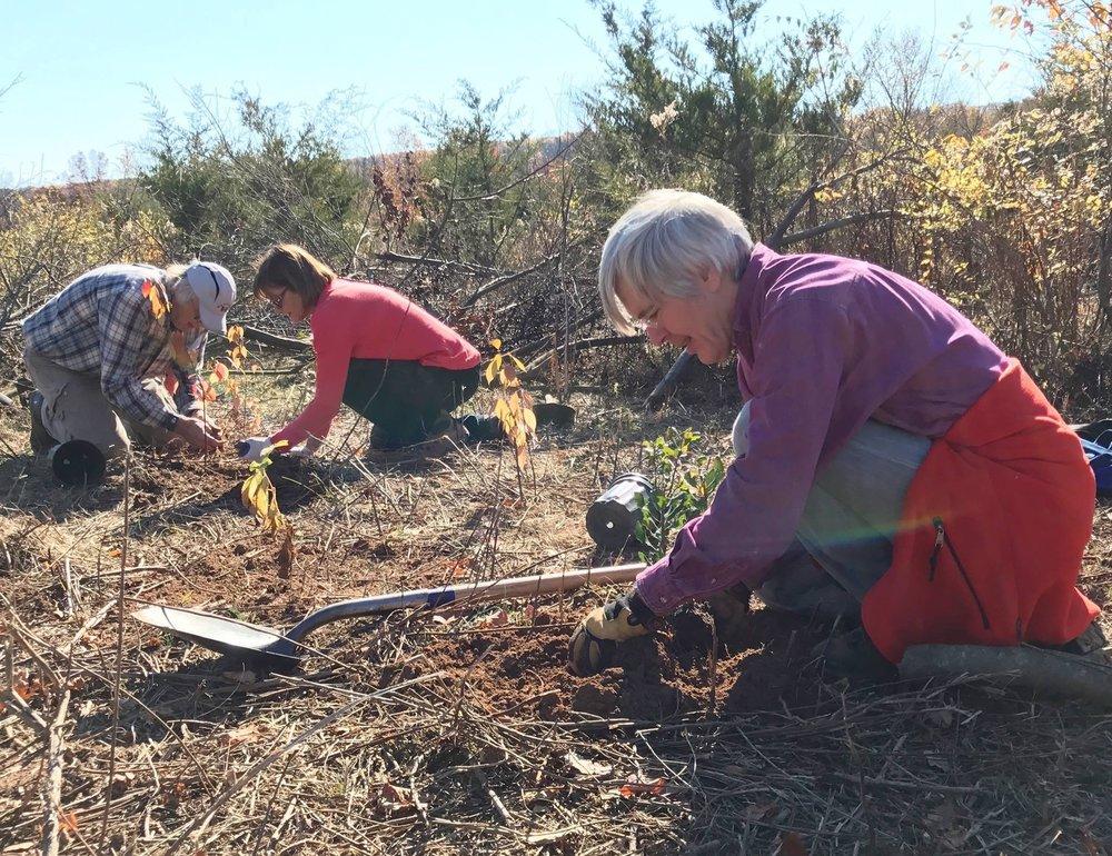 Roger Thorpe and Caroline Katmann volunteering at a habitat restoration site.