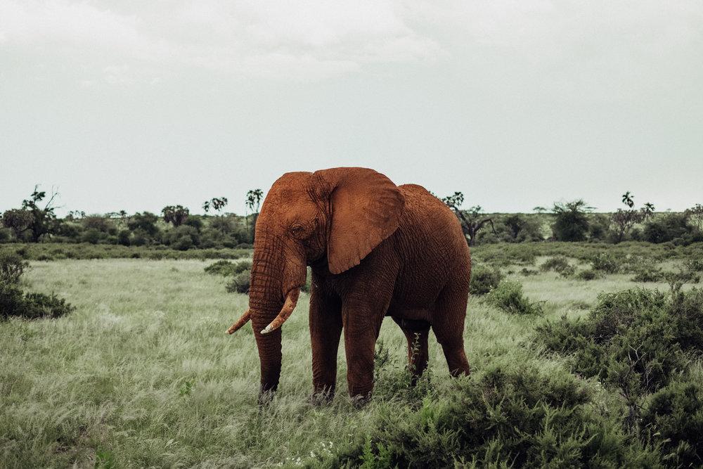 kenya-85.jpg