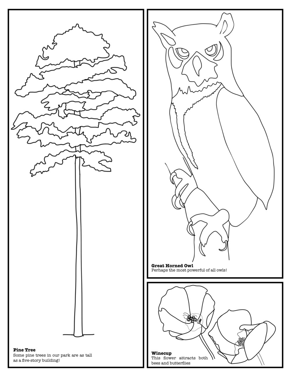 Coloring Book Layout 2.png