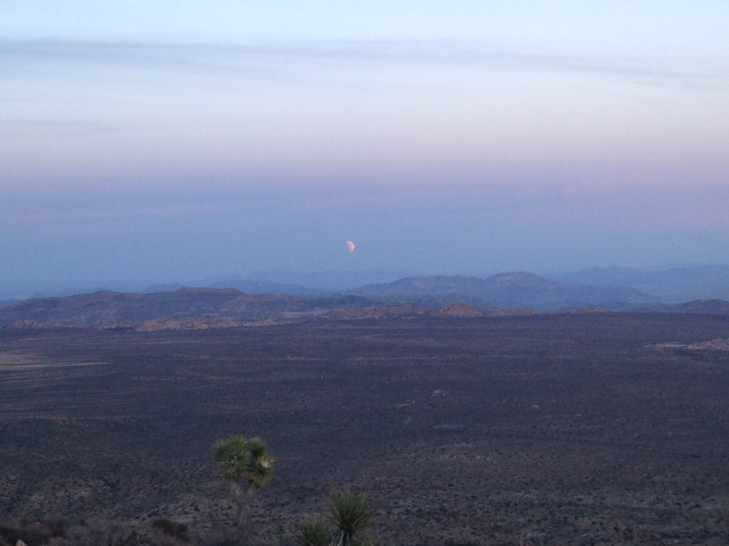 Watching the lunar eclipse from Ryan Mountain in Joshua Tree. Big horned were out at twilight watching too