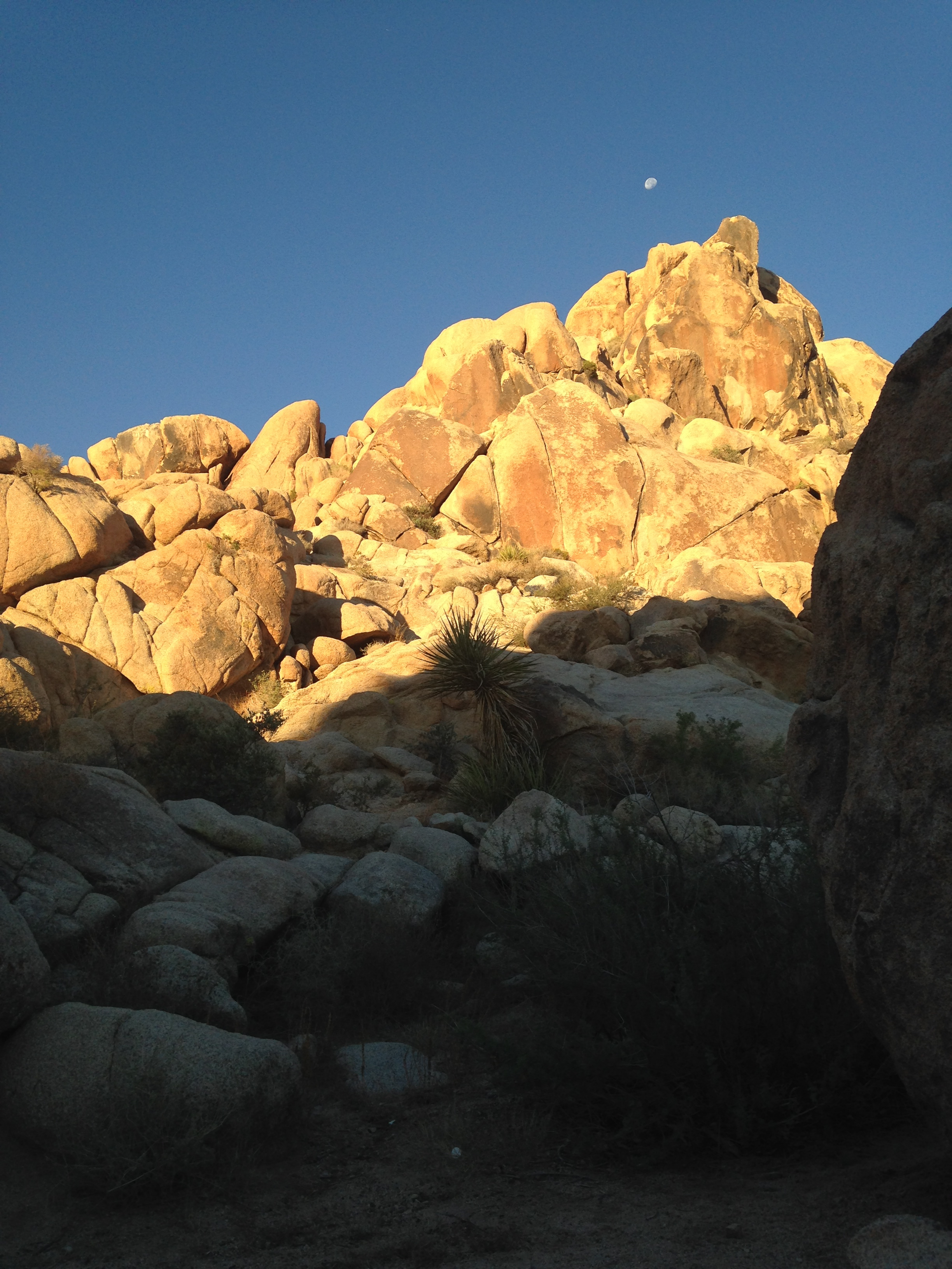 The view from my front door for a week in Joshua Tree