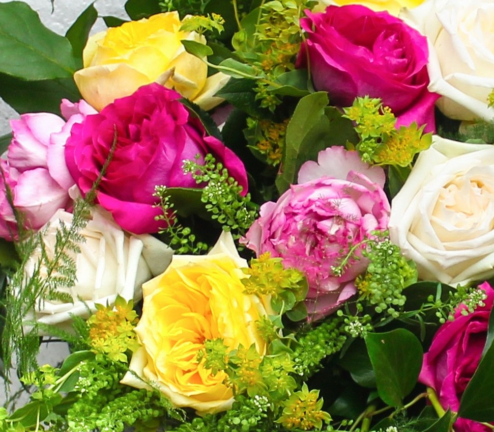 Scented roses are everything a flower should be - stunningly beautiful and stunningly fragrant