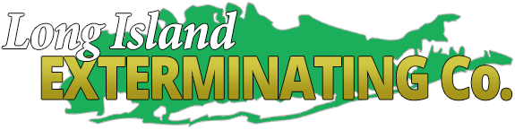 Long Island Exterminator : Pest Control & Wildlife Removal | NYC