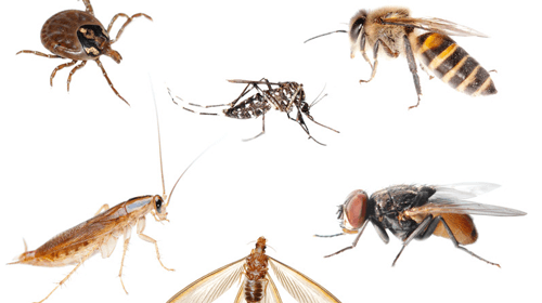 long-island-exterminating-company-pest-control-services.png