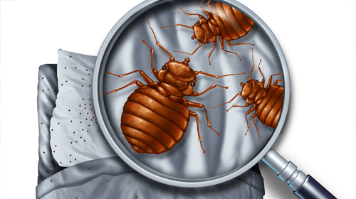 long-island-exterminating-company-bed-bug-removal-services.png