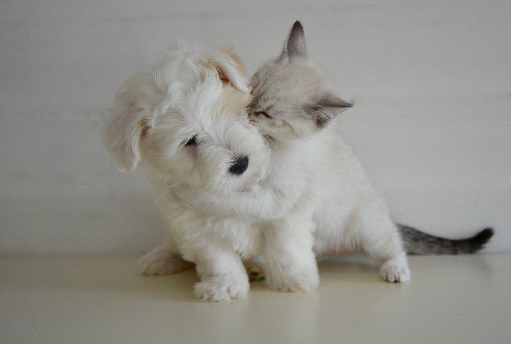 kiss-2728106.jpg