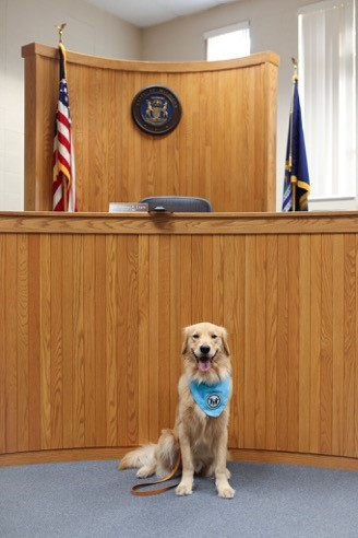 Trigger - Our lovable Canine Advocate