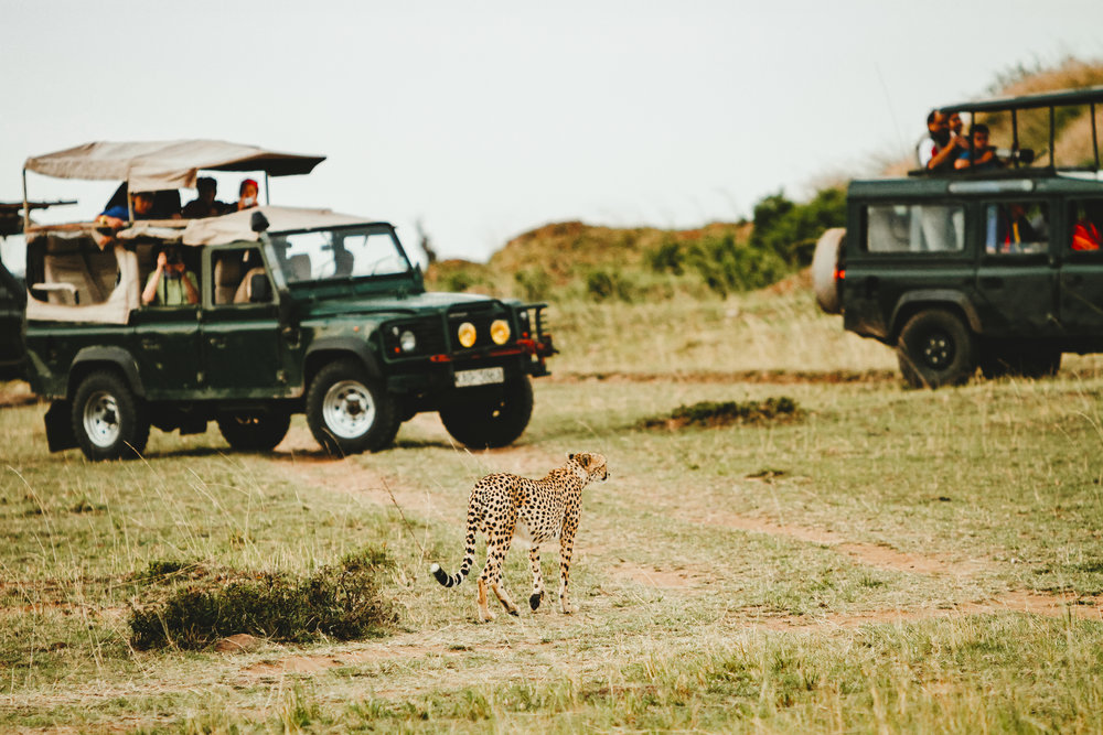 African Safari Game Tour