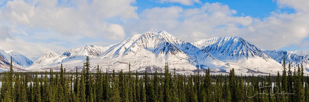 Spring 2018 in Denali National Park (c) Chad Dutson
