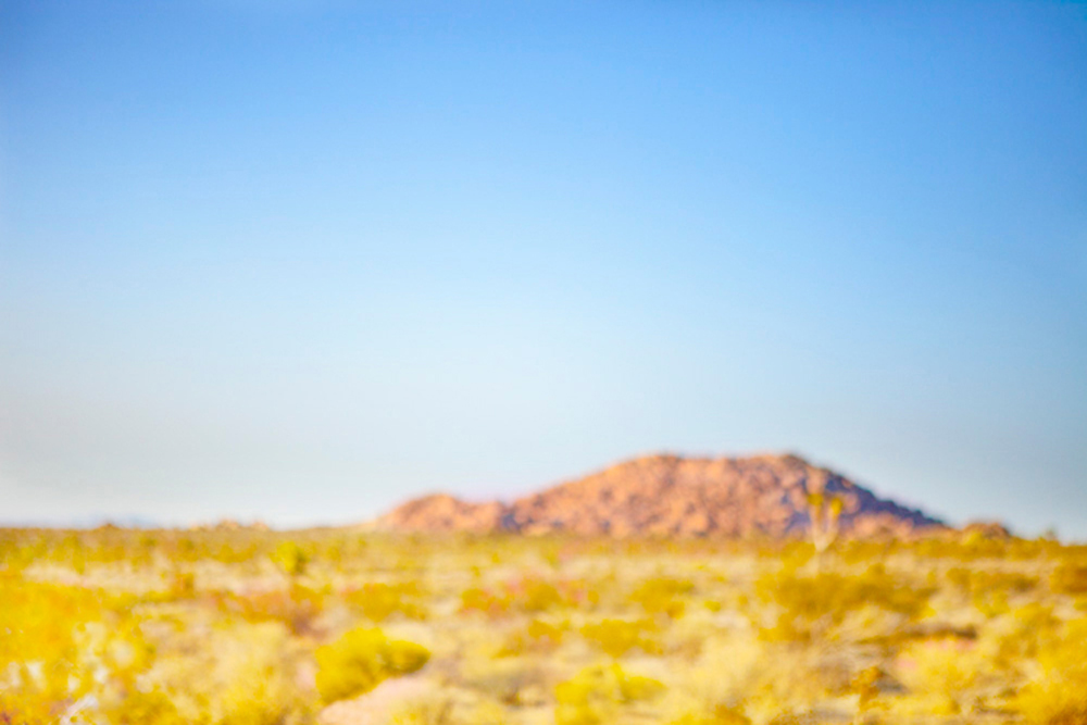 Desert Meadow