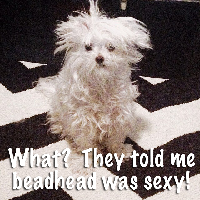 Photo By Leslie @ www.LavishBoudoir.com #dog #funny #bedhead
