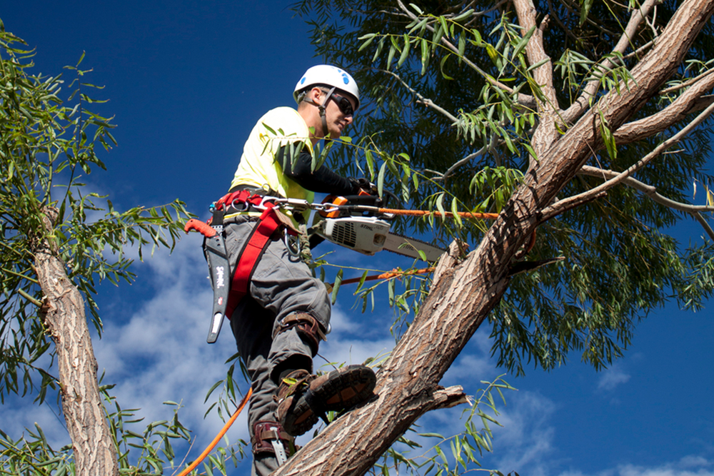 Tree Trimming and Removal - Professional equipment and service to get the job done right.
