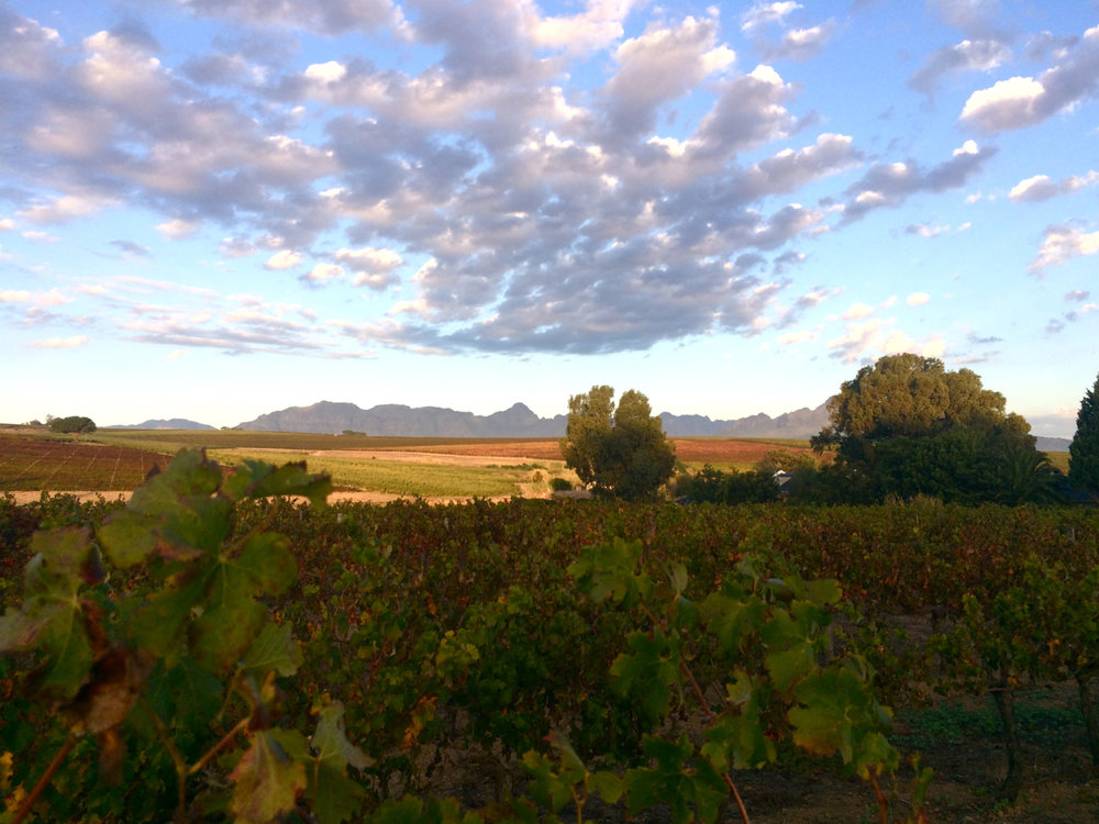 """Vineyards around Stellenbosch. Mountains, to me, have to be purple to be """"real"""" mountains."""