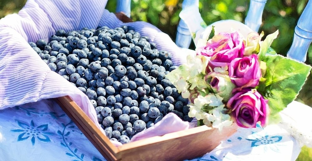 blueberries-870514_1920.jpg