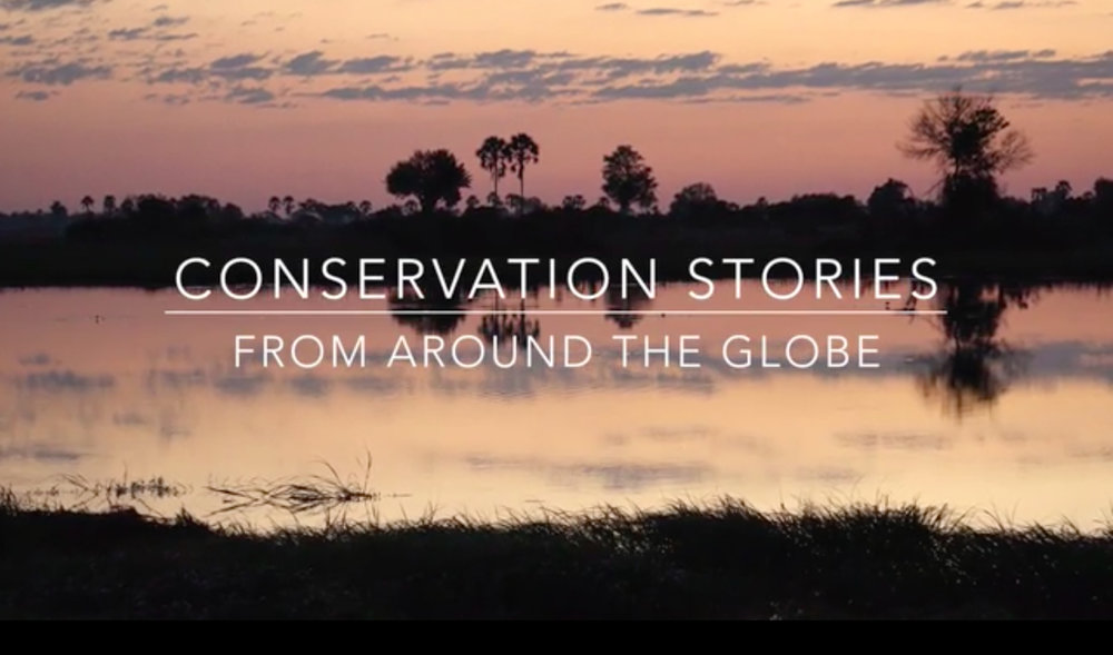 Conservation-Stories-Pic.jpg