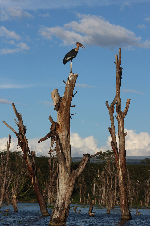 bird kenya lake safari.jpg