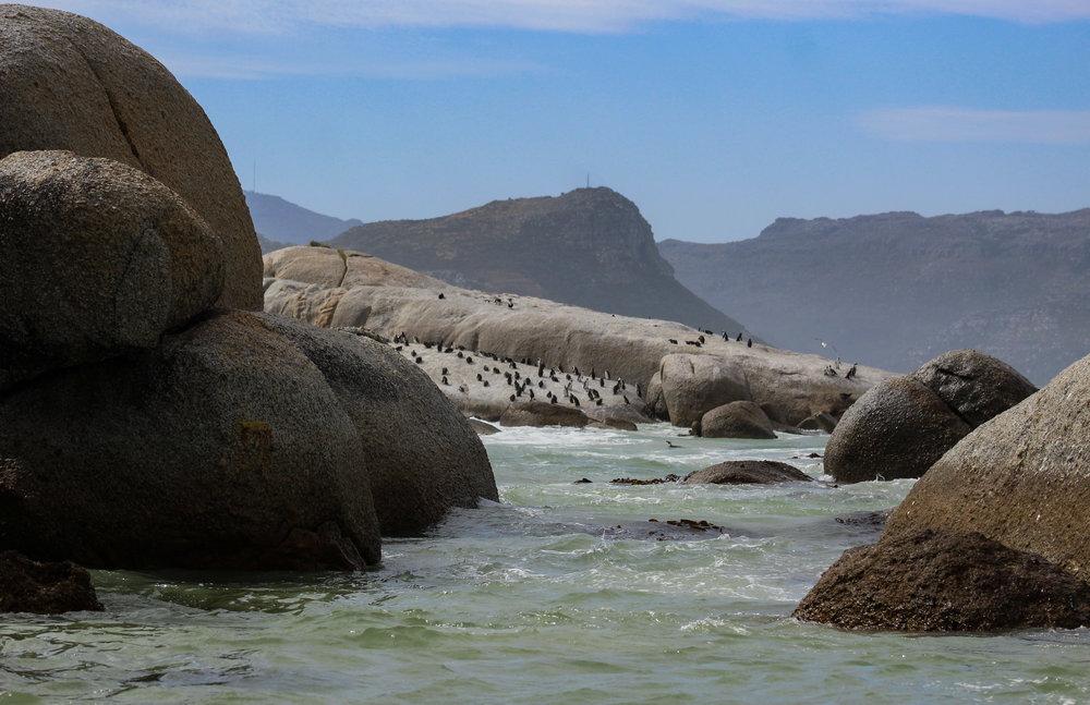 Boulders Beach South Africa African penguins_.jpg