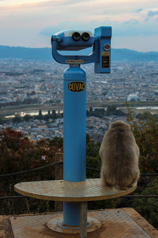 edited monkey overlooking japanese city (1 of 1).jpg