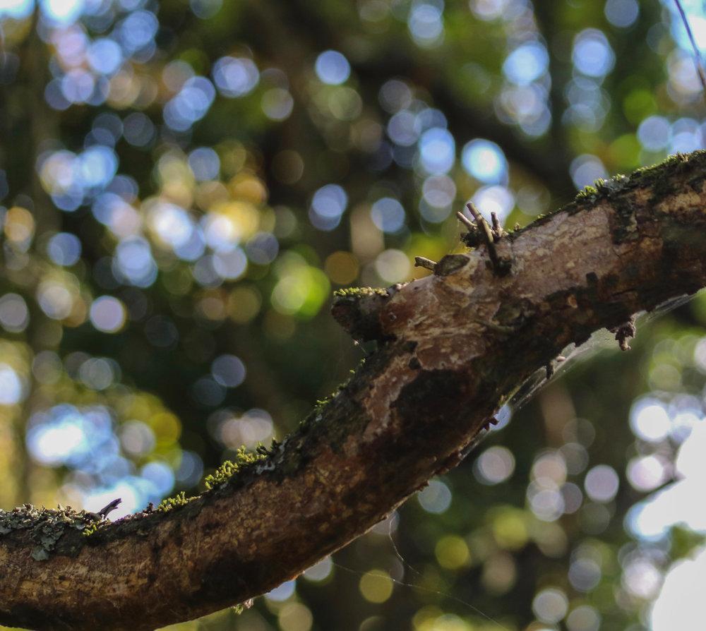 tree branch cool dappling hampstead heath 2 (1 of 1).jpg