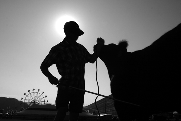 Chase Lockhart of Jackson, Wyo., calms his steer before the 4-H Beef Competition at the Grand Teton County Fair.