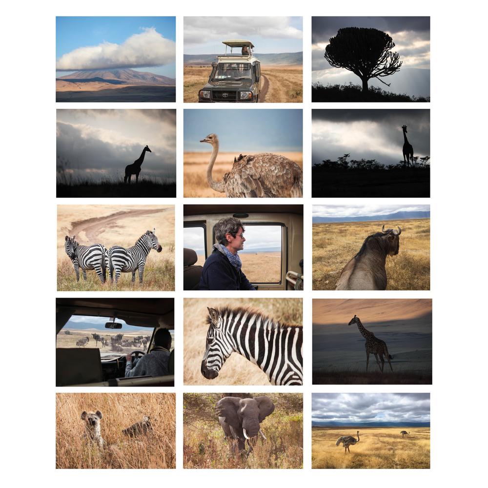 safariwebsized.jpg