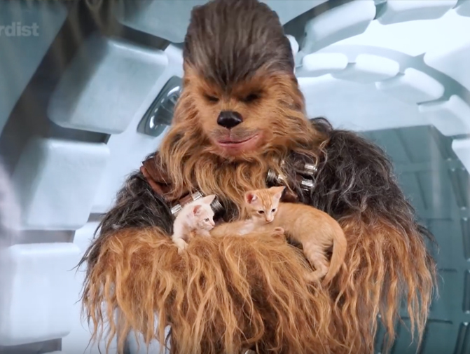 solo: A star wars story - During the Solo: A Star Wars Story Blu-ray campaign, we took some of Han's advice and let the Wookie win. Capturing Chewbacca's appeal in an adorable way, our visit to Nerdist resulted in an original, sharable piece of content that resonated across multiple demographics. After all, when Chewie plays with kittens, we're all winning.