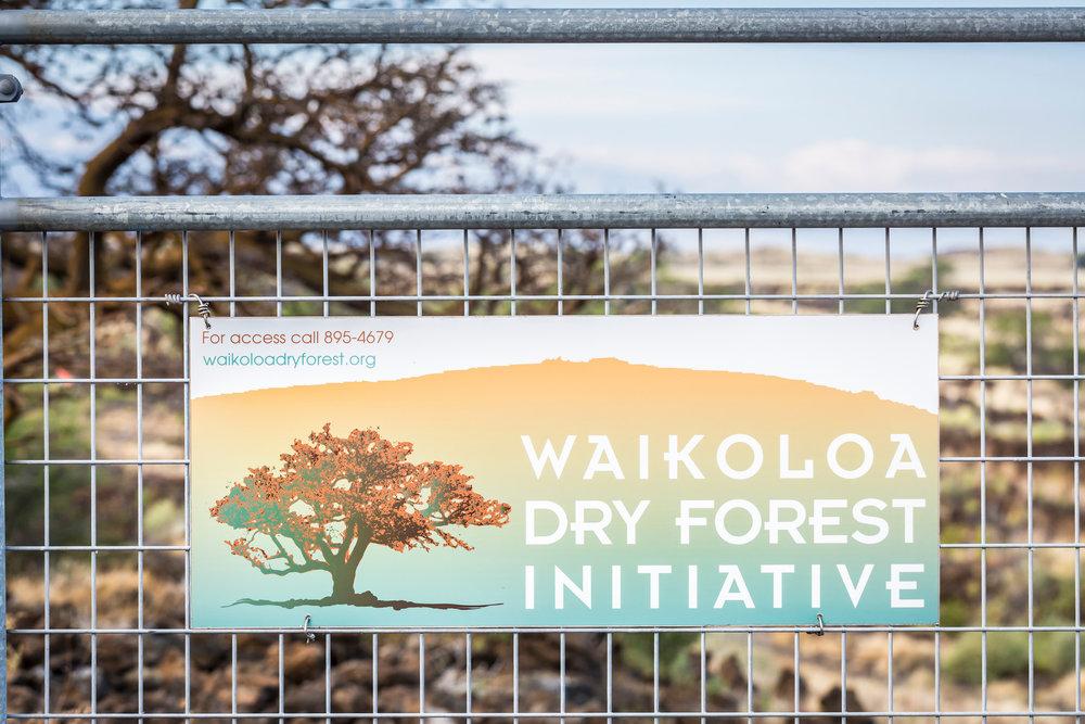 Dry-forest-initiative-signwilli-willi-tree-festival-Waikoloa-Village-Hawaii-Island-South-Kohala-303.jpg