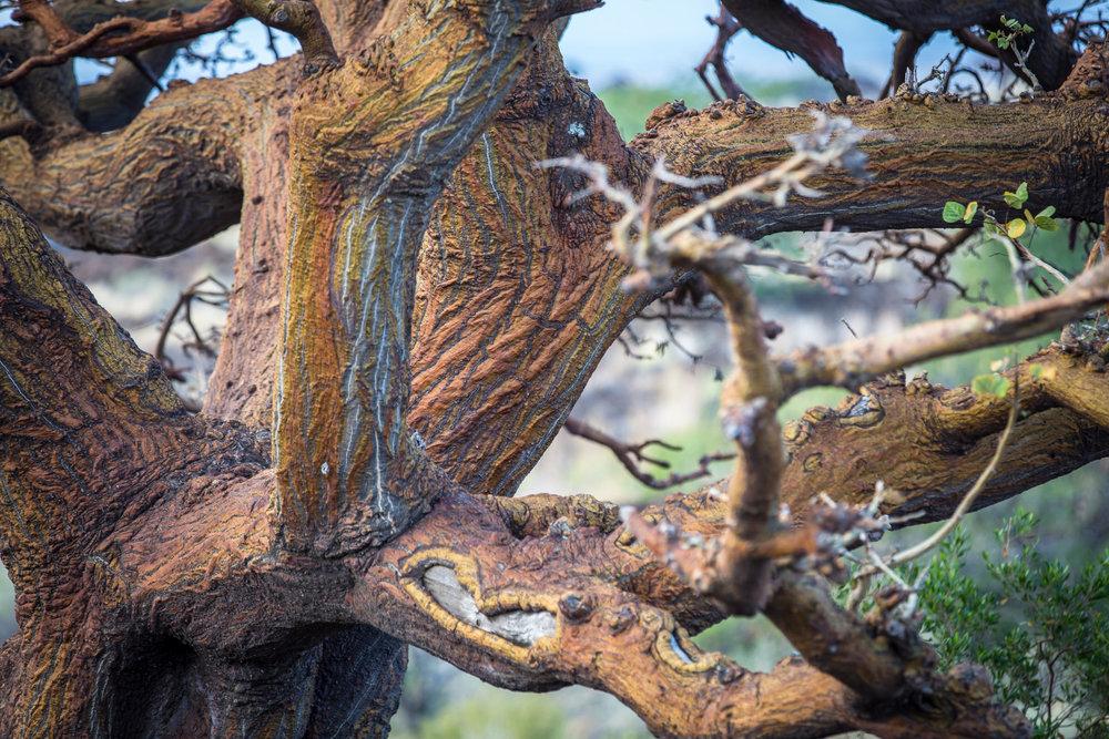 texture-willi-willi-tree-festival-Waikoloa-Village-Hawaii-Island-South-Kohala-309.jpg
